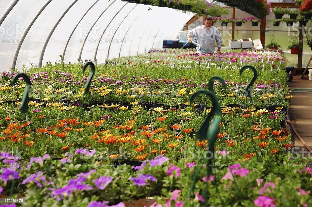 greenhouse royalty-free stock photo
