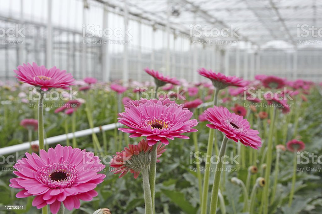 Greenhouse # 5 royalty-free stock photo
