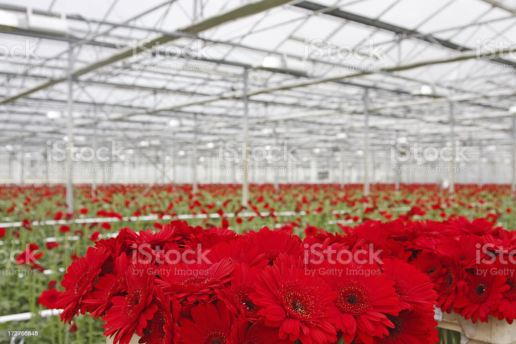 Greenhouse # 6 royalty-free stock photo