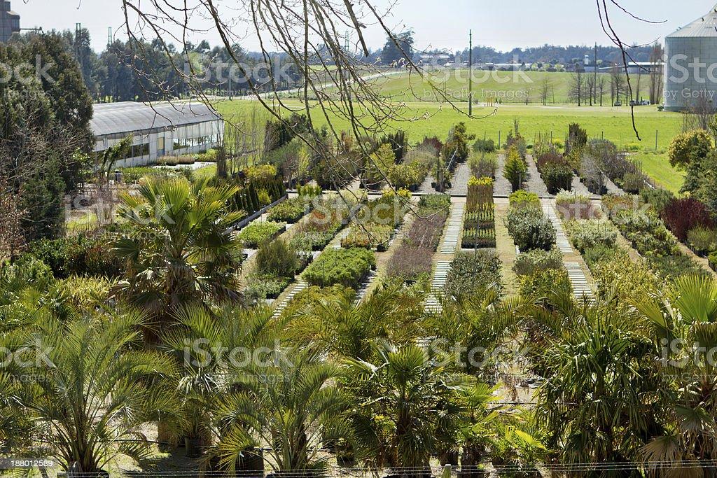 Greenhouse - Plants Nursery royalty-free stock photo