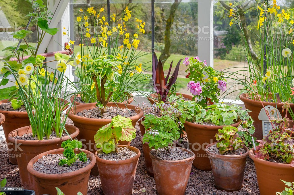 Greenhouse Plants stock photo