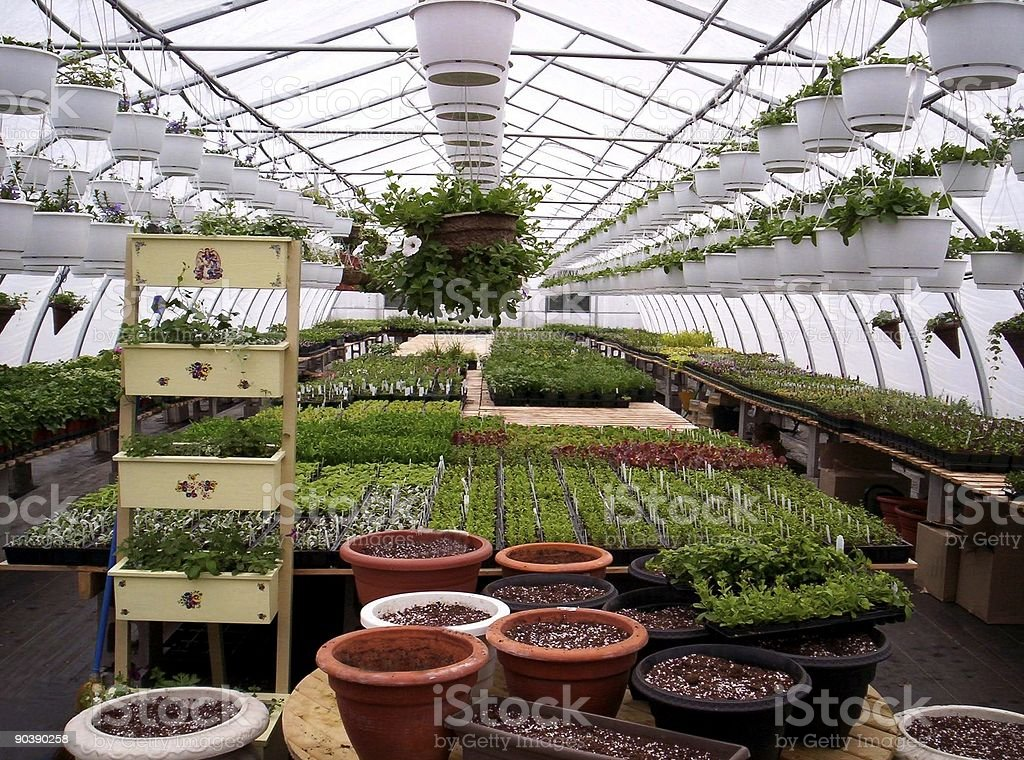 greenhouse plants royalty-free stock photo