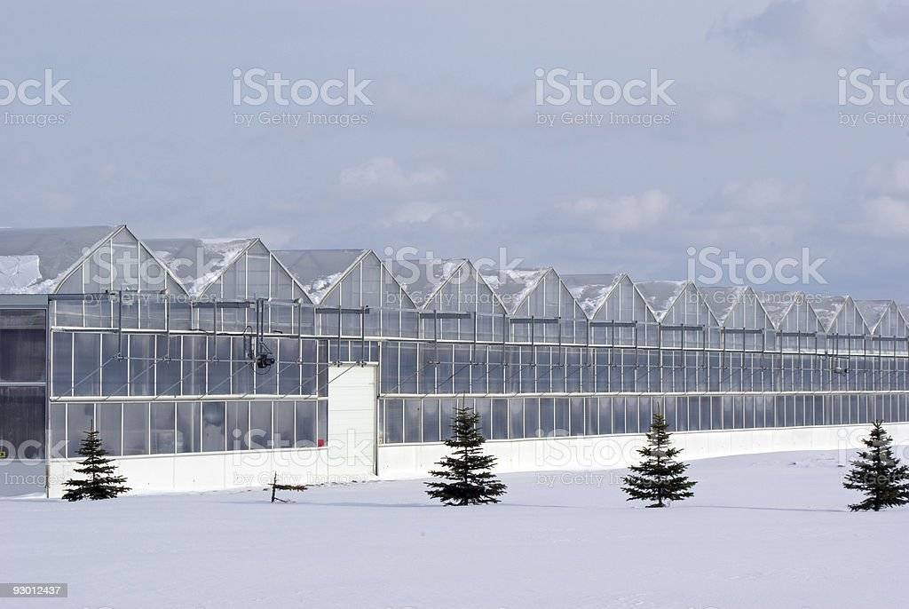 Greenhouse Range in Winter royalty-free stock photo