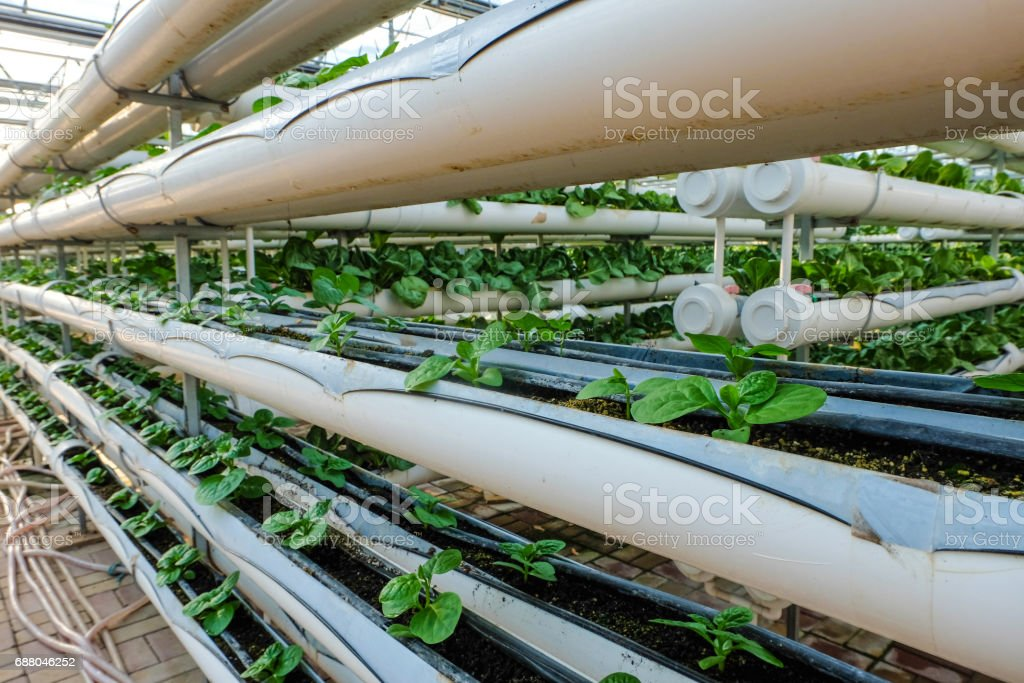 greenhouse vegetable factory stock photo