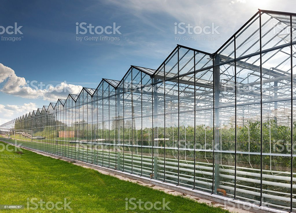 greenhouse vegetable production stock photo