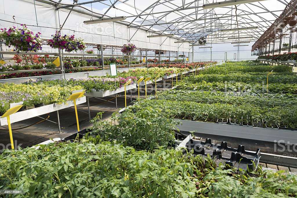 Greenhouse vegetables and flowers stock photo