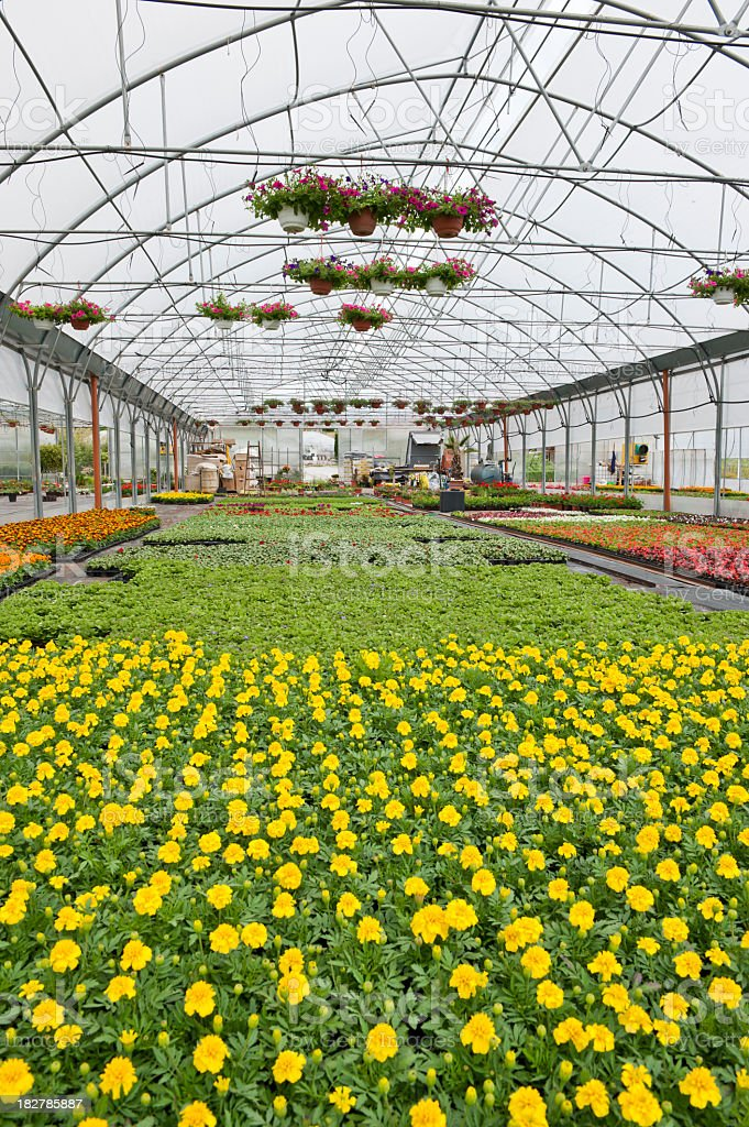 Greenhouse vertical royalty-free stock photo
