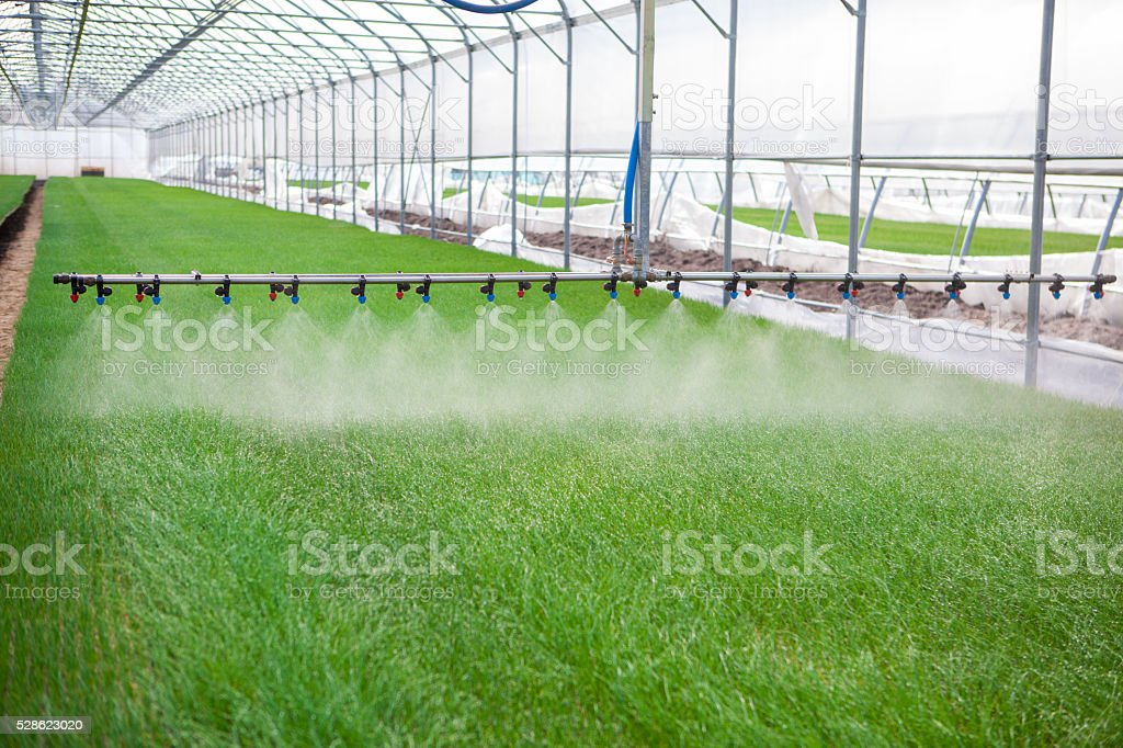 Greenhouse watering system in action stock photo
