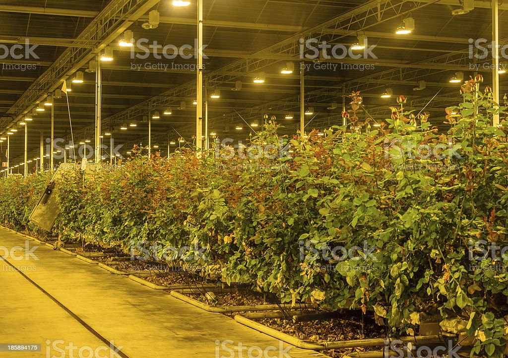 Greenhouse with assimilation light stock photo