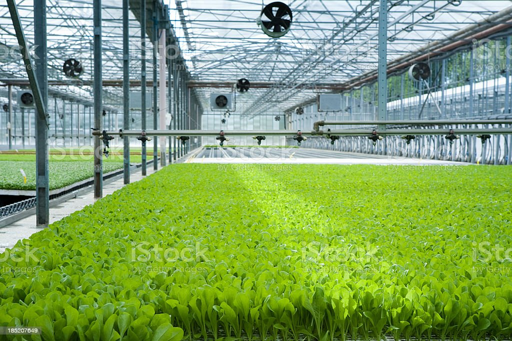 Greenhouse with fans and green plants royalty-free stock photo