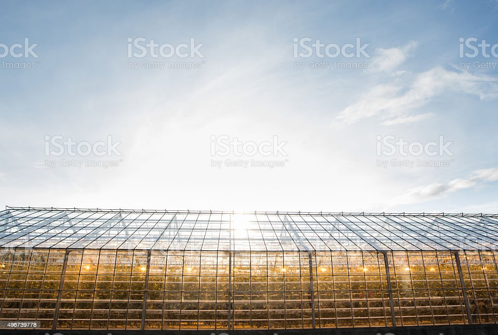 greenhouse with lamps inside stock photo