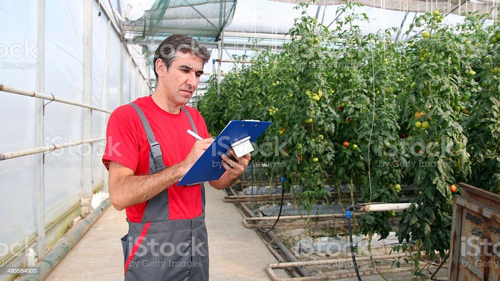 Greenhouse Worker stock photo