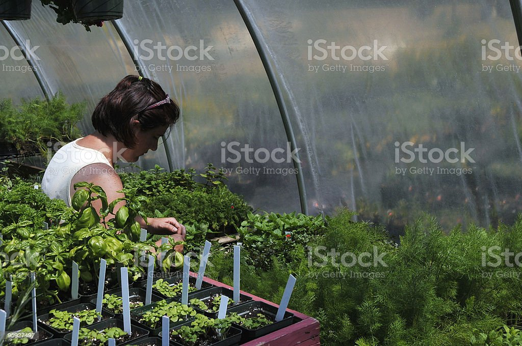 Greenhouse Working Woman royalty-free stock photo
