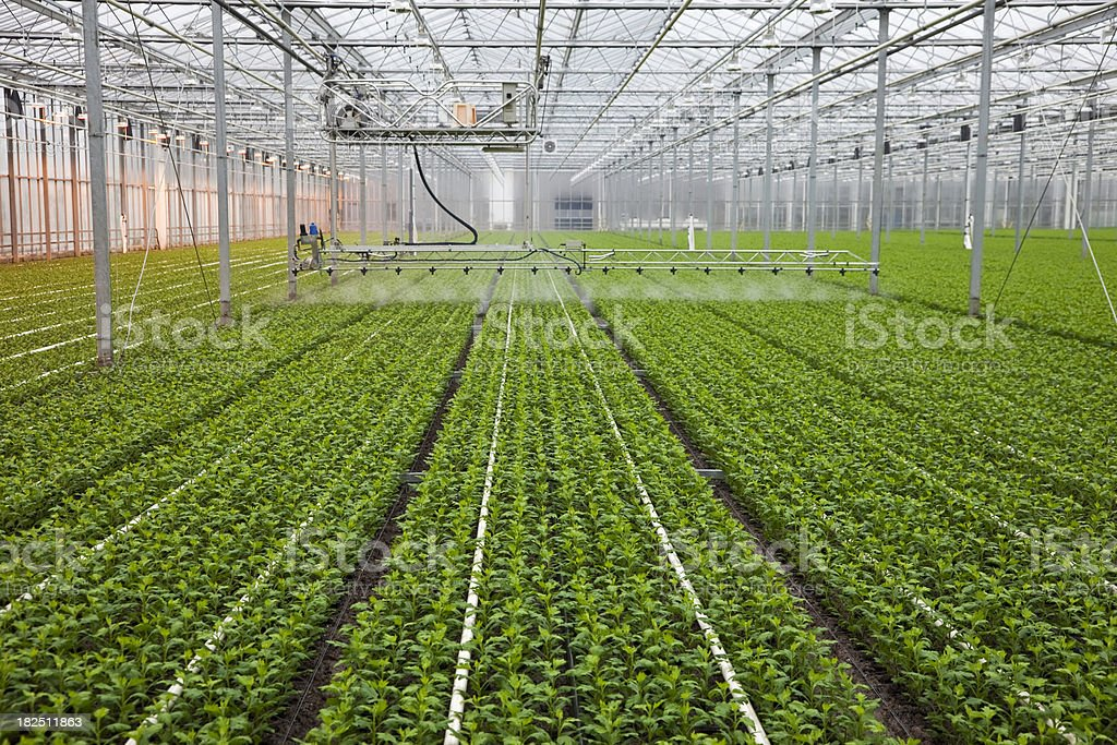 Greenhouse # 19 XXXL royalty-free stock photo