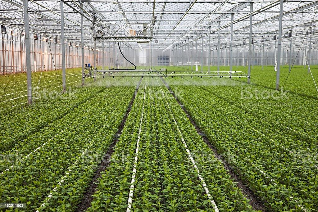 Greenhouse # 19 XXXL stock photo