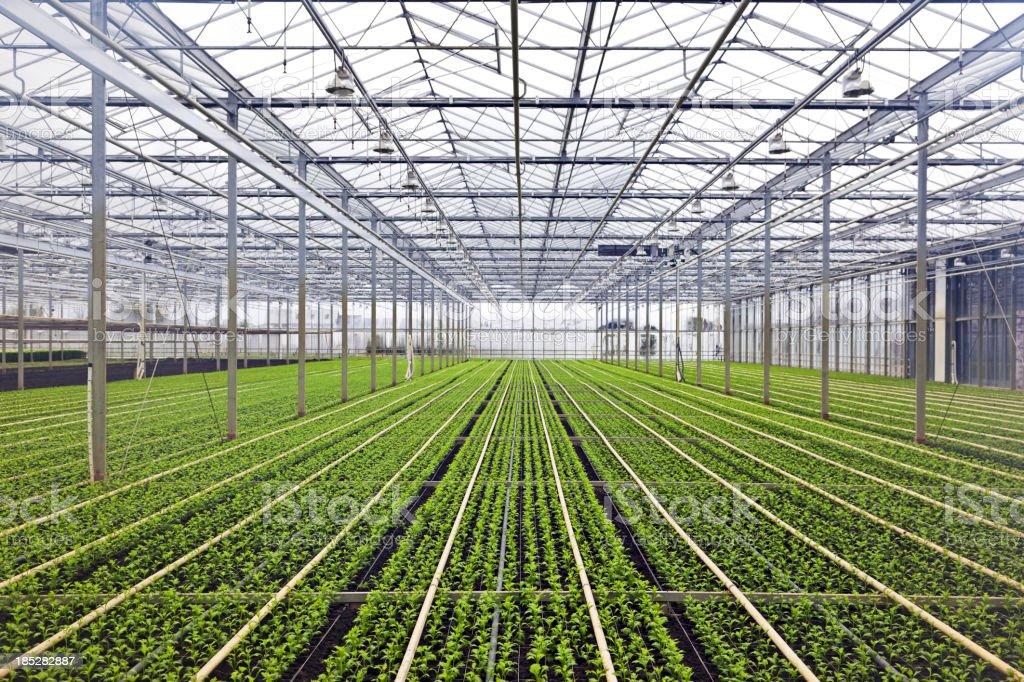 Greenhouse # 40 XXXL stock photo