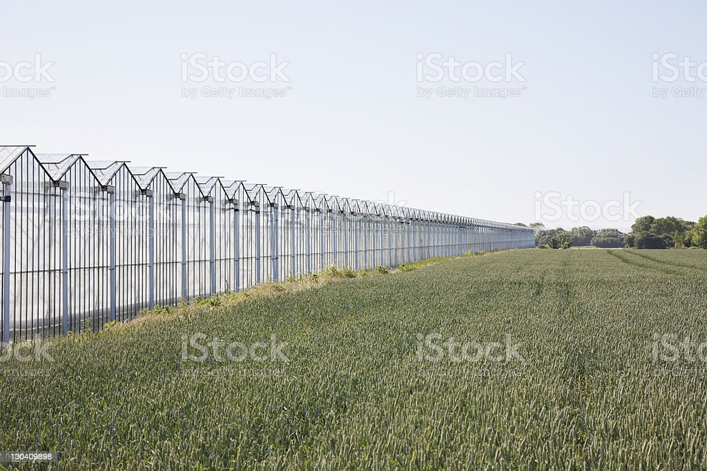 Greenhouses along field royalty-free stock photo