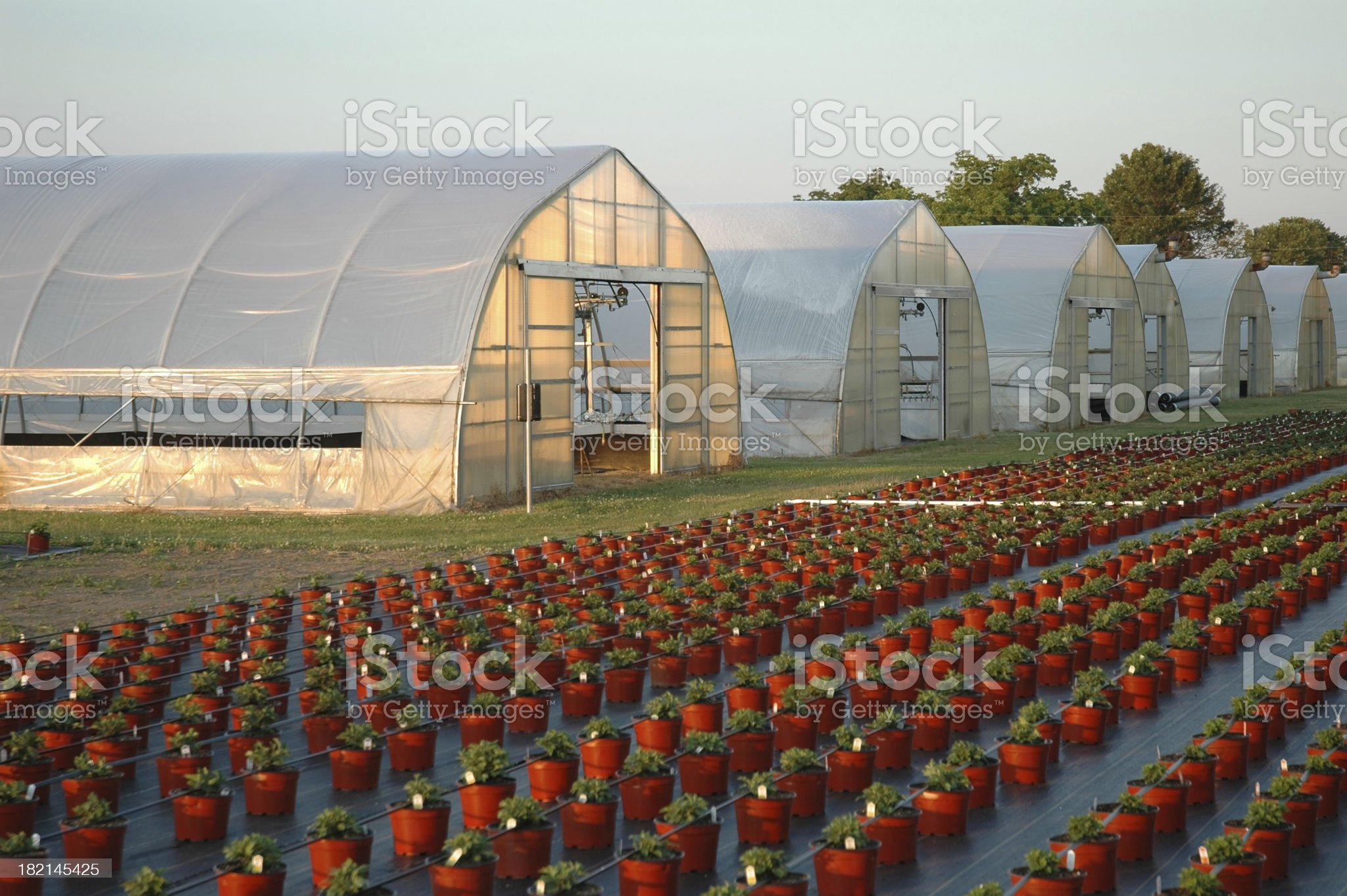 Greenhouses and Pots royalty-free stock photo