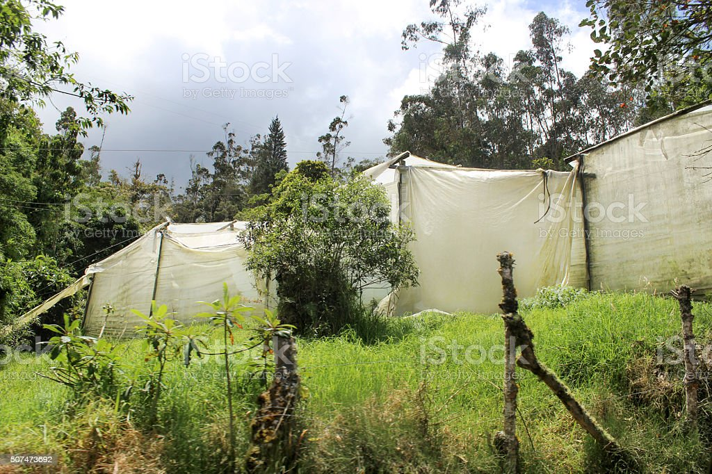 Greenhouses in Ecuador stock photo