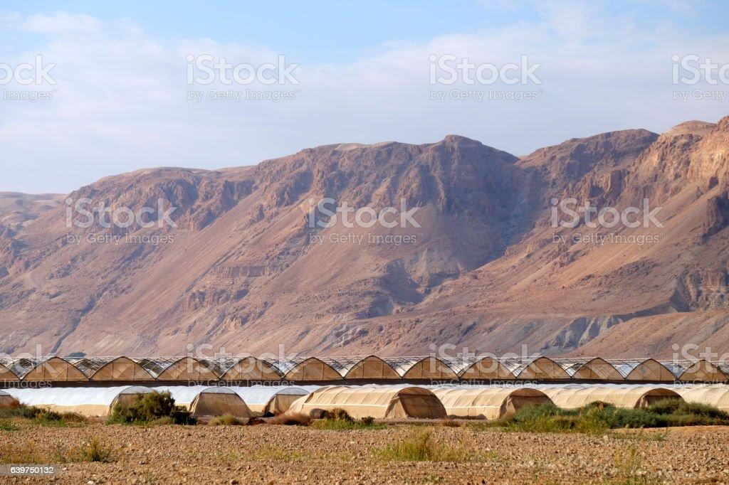 Greenhouses in Judea Desert. stock photo