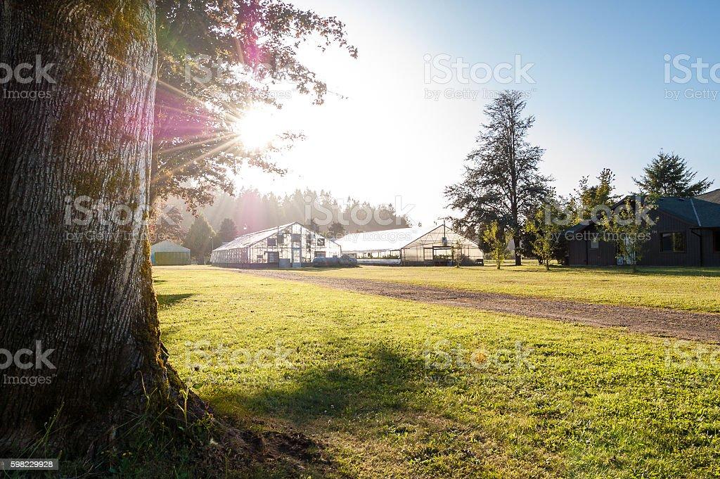Greenhouses on a sunny Oregon farm stock photo