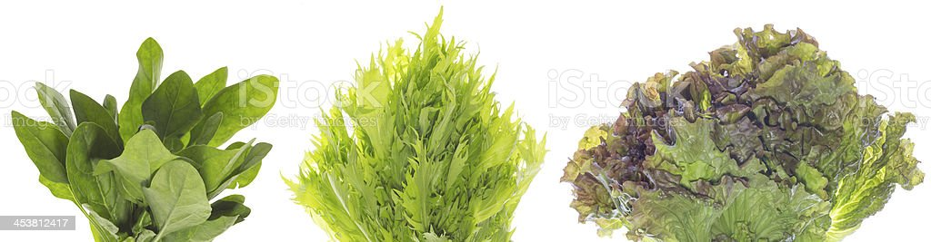 Greens in a white background stock photo
