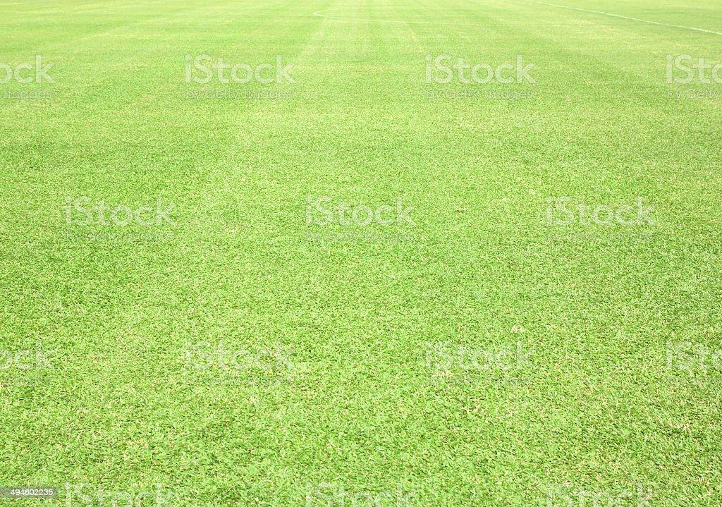 greensward stock photo