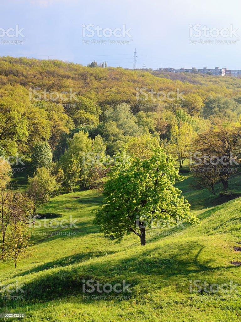 Greentree en la colina. Vertical foto de stock libre de derechos