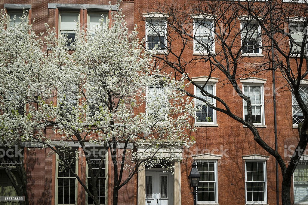 Greenwich Village apartment, blooming cherry trees, New York Cit stock photo