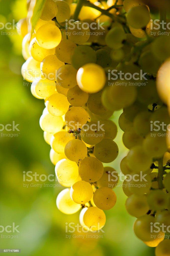 Green-yellow skinned grape stock photo