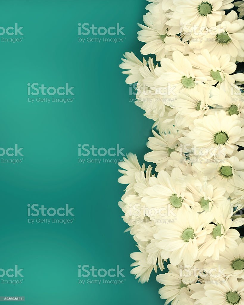 Greeting card with chamomiles stock photo