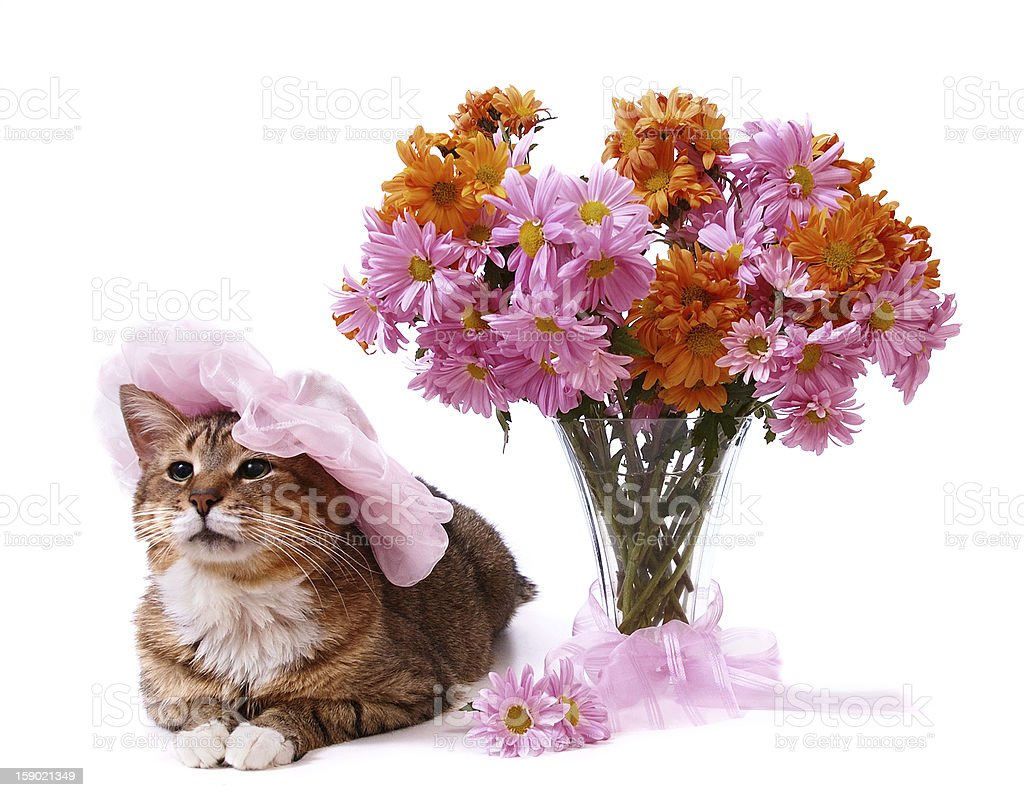 Greeting cart with cat stock photo