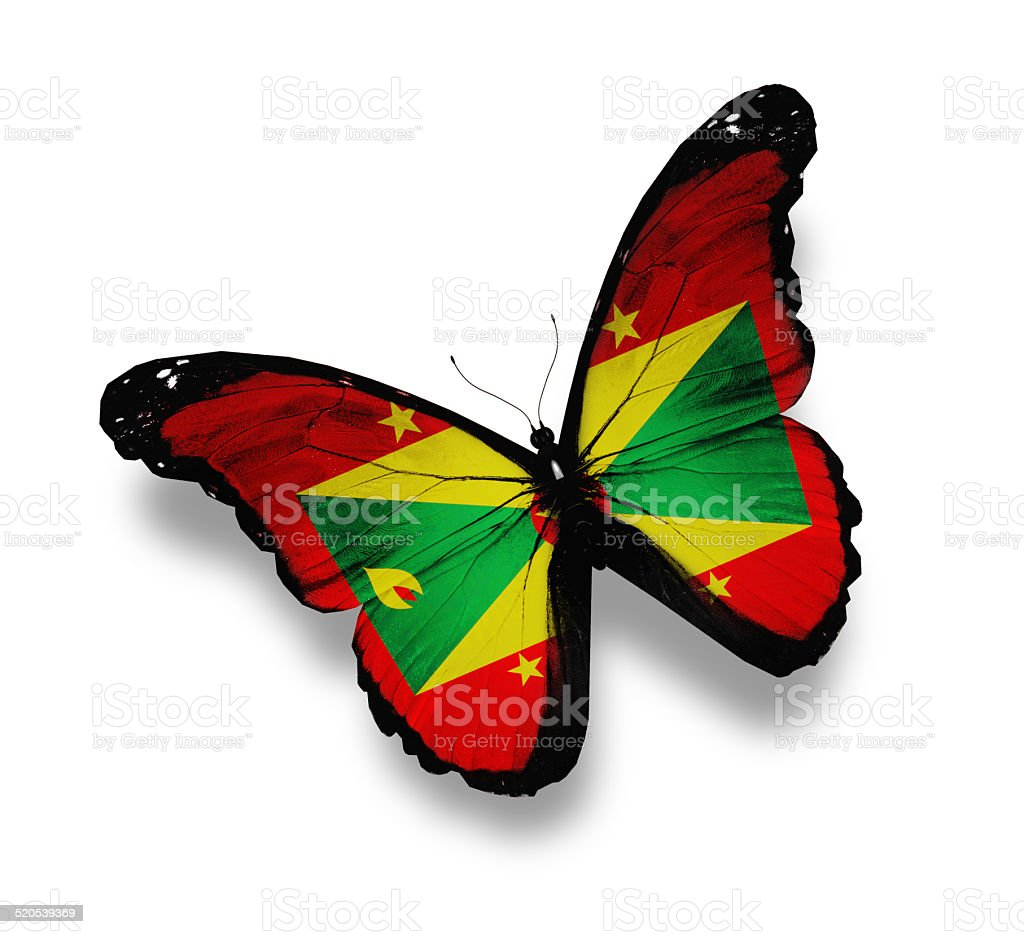 Grenada flag butterfly, isolated on white stock photo