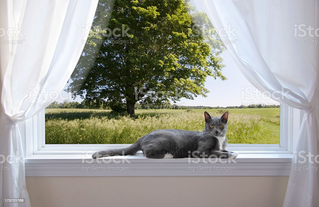 Grey and white cat laying on edge of window sill stock photo