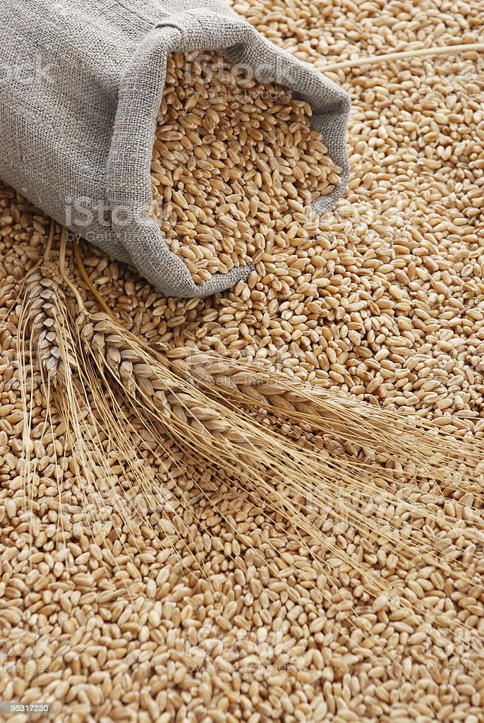 A grey bag on top of grain seeds and filled with the seeds royalty-free stock photo