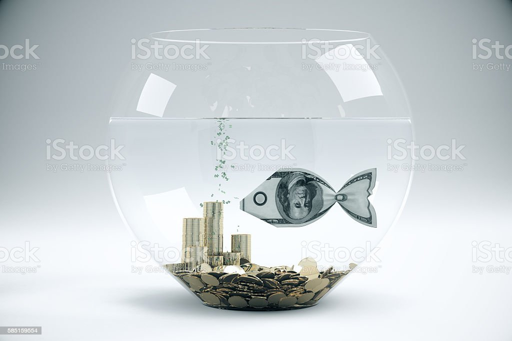 Grey bowl with dollar fish stock photo
