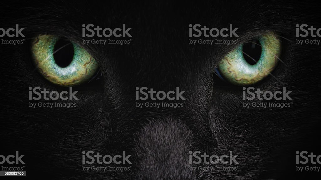grey cat face closeup with green eyes stock photo