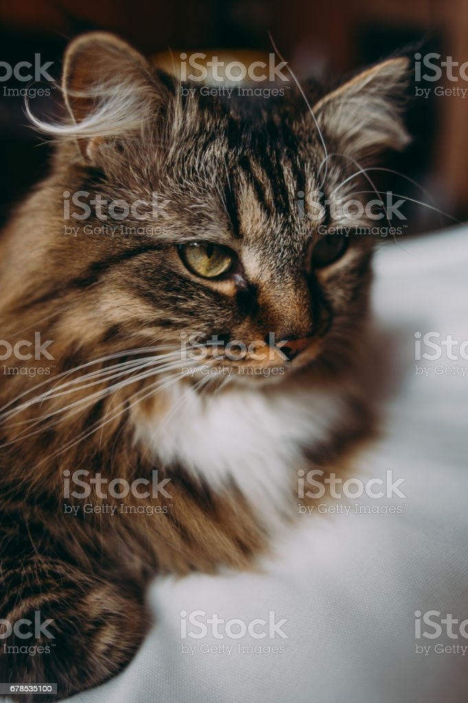Grey cat lying on bed stock photo