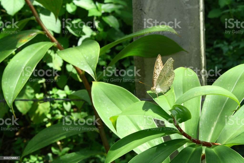 Grey color butterfly on leaf stock photo