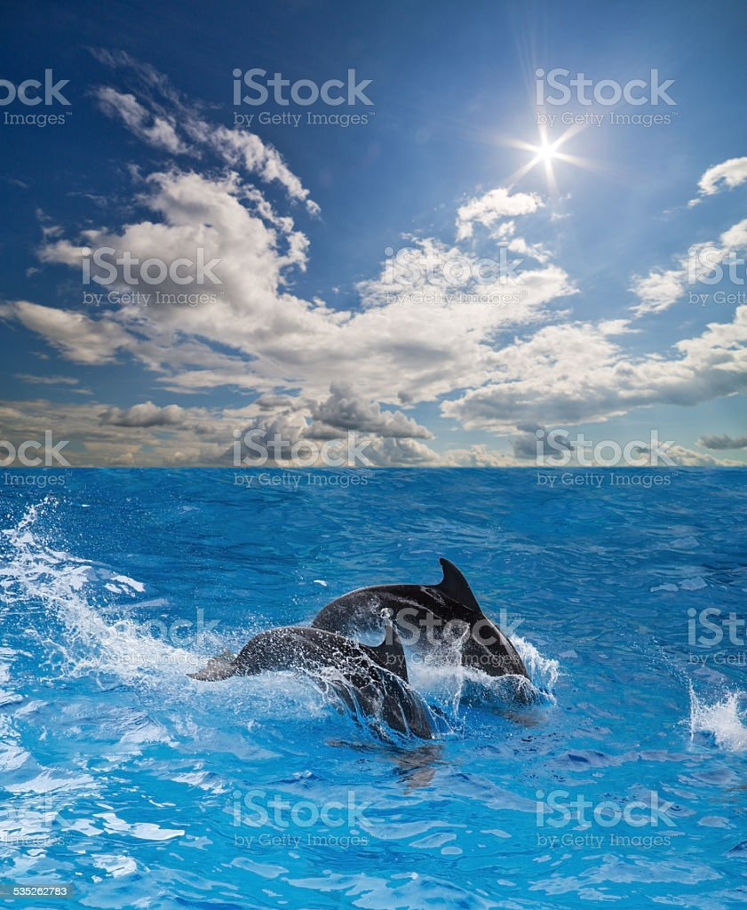 grey dolphins in blue water under sun stock photo