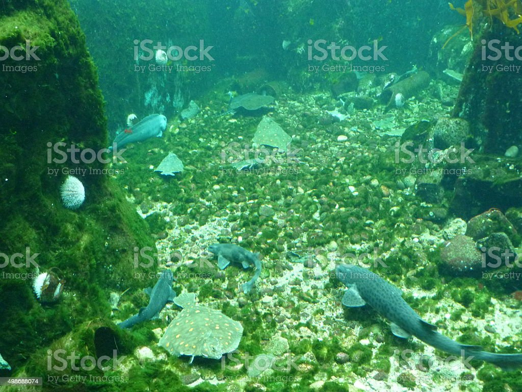 Grey fish, green bottom stock photo