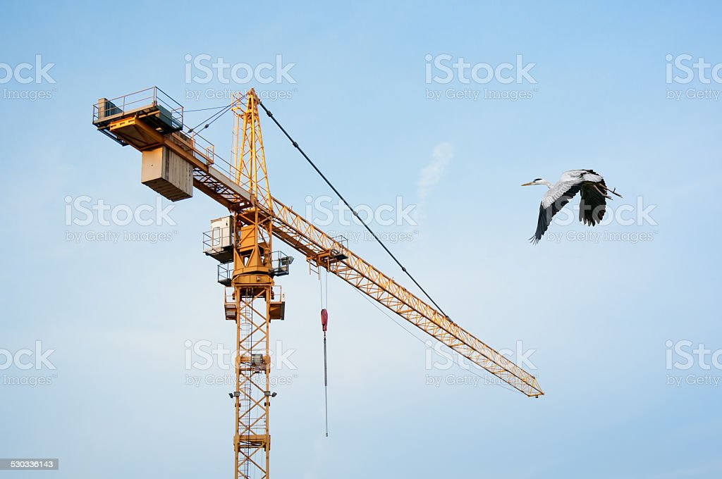 grey heron flying against a building crane stock photo