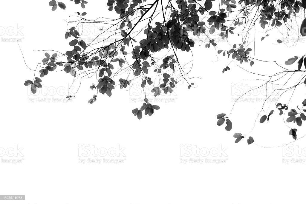Grey leafs stock photo