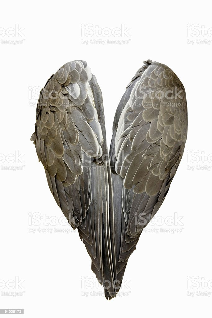 Grey pair of wings isolated on white royalty-free stock photo