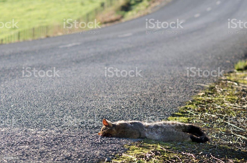 Grey Possum stock photo