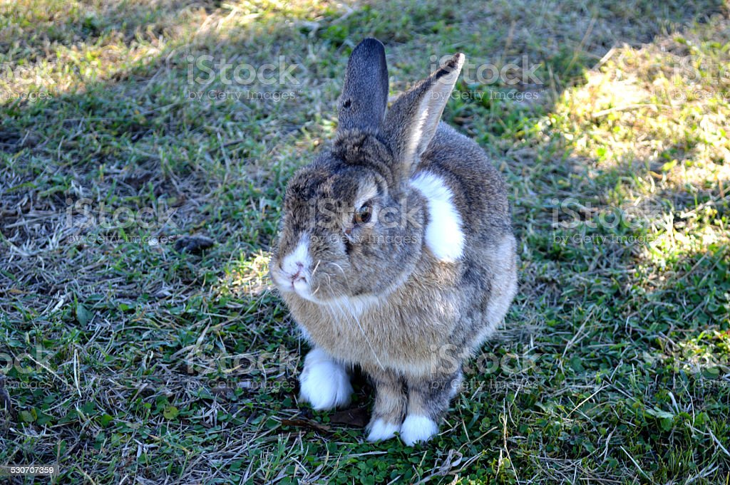 Gris conejo en park foto de stock libre de derechos