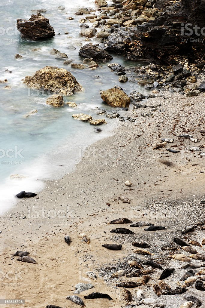 Grey seals at Mutton Cove, Godrevy stock photo