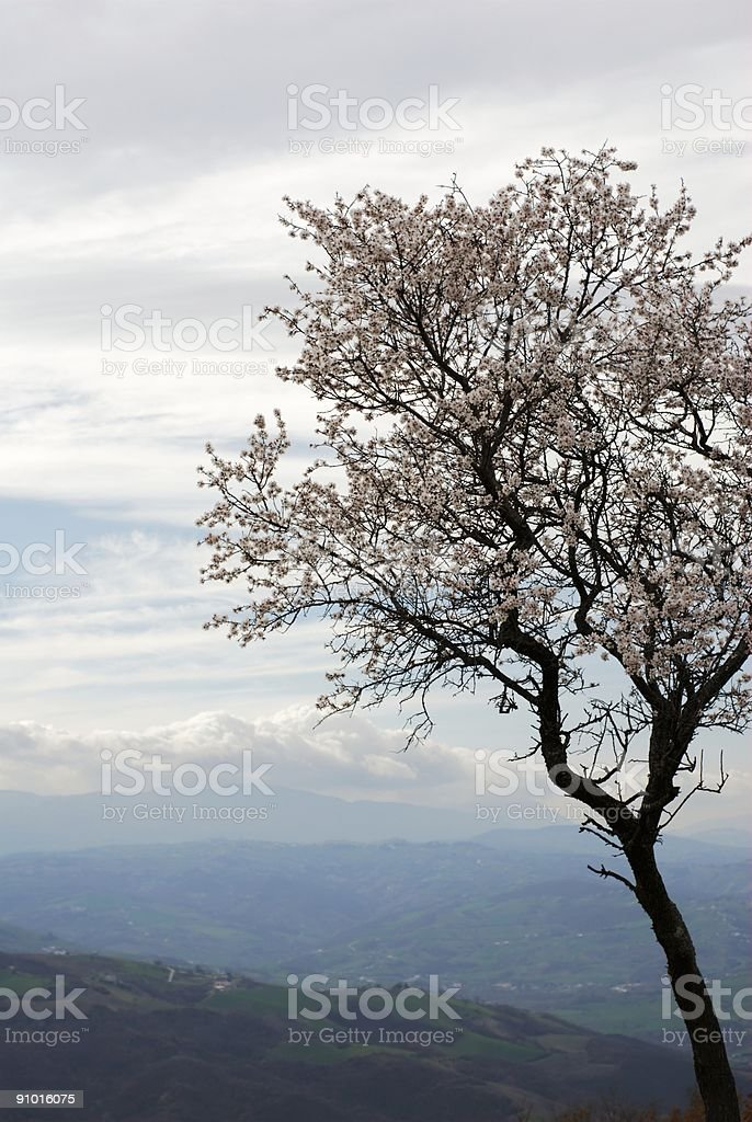 Grey spring sky royalty-free stock photo