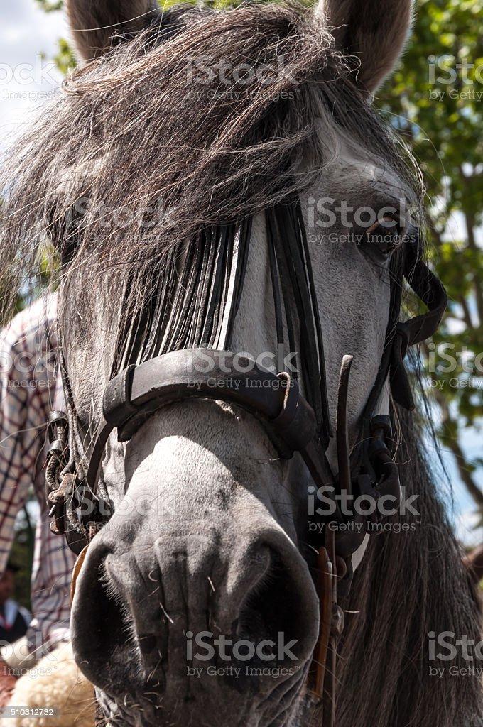 Grey tall horse long mane stock photo