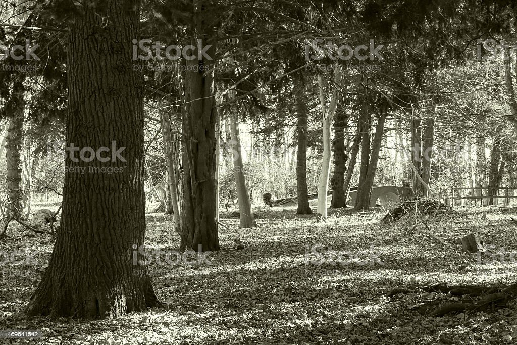 Greyfriars Wood, Dunwich, Suffolk stock photo